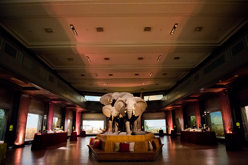 nyc wedding venue museum of natural history susan shek