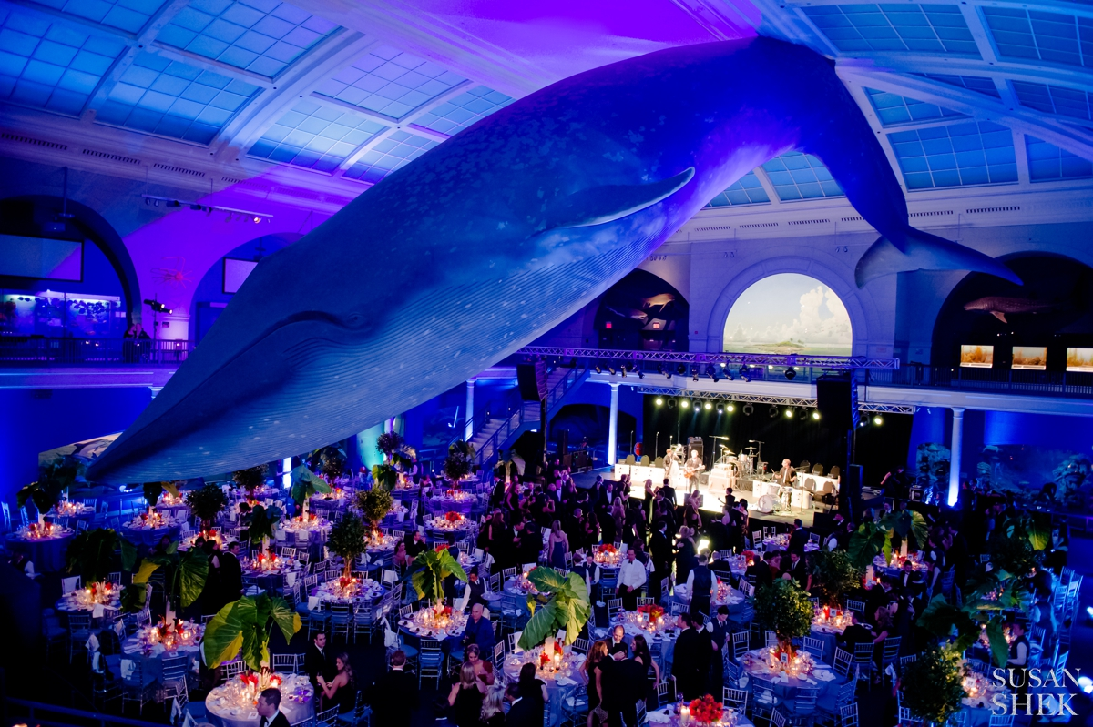 museum of natural history wedding, wedding at museum, museum wedding, wedding photographer, wedding venue
